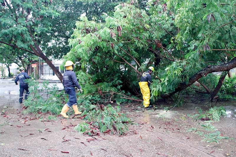 Caída de árboles dejó fuerte aguacero matutino en Neiva