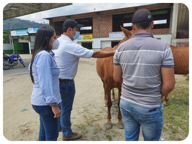Vacunados equinos contra la encefalitis venezolana en Campoalegre y Garzón