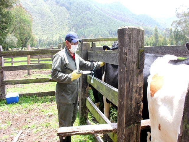 Por bloqueos, aplazada vacunación contra aftosa en Garzón