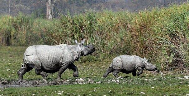 Nace rinoceronte en Florida que busca recuperar la especie