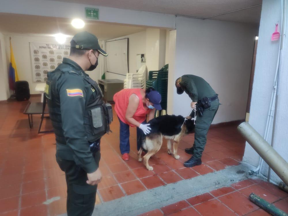 Policía Huila rescata en La Argentina a perro maltratado
