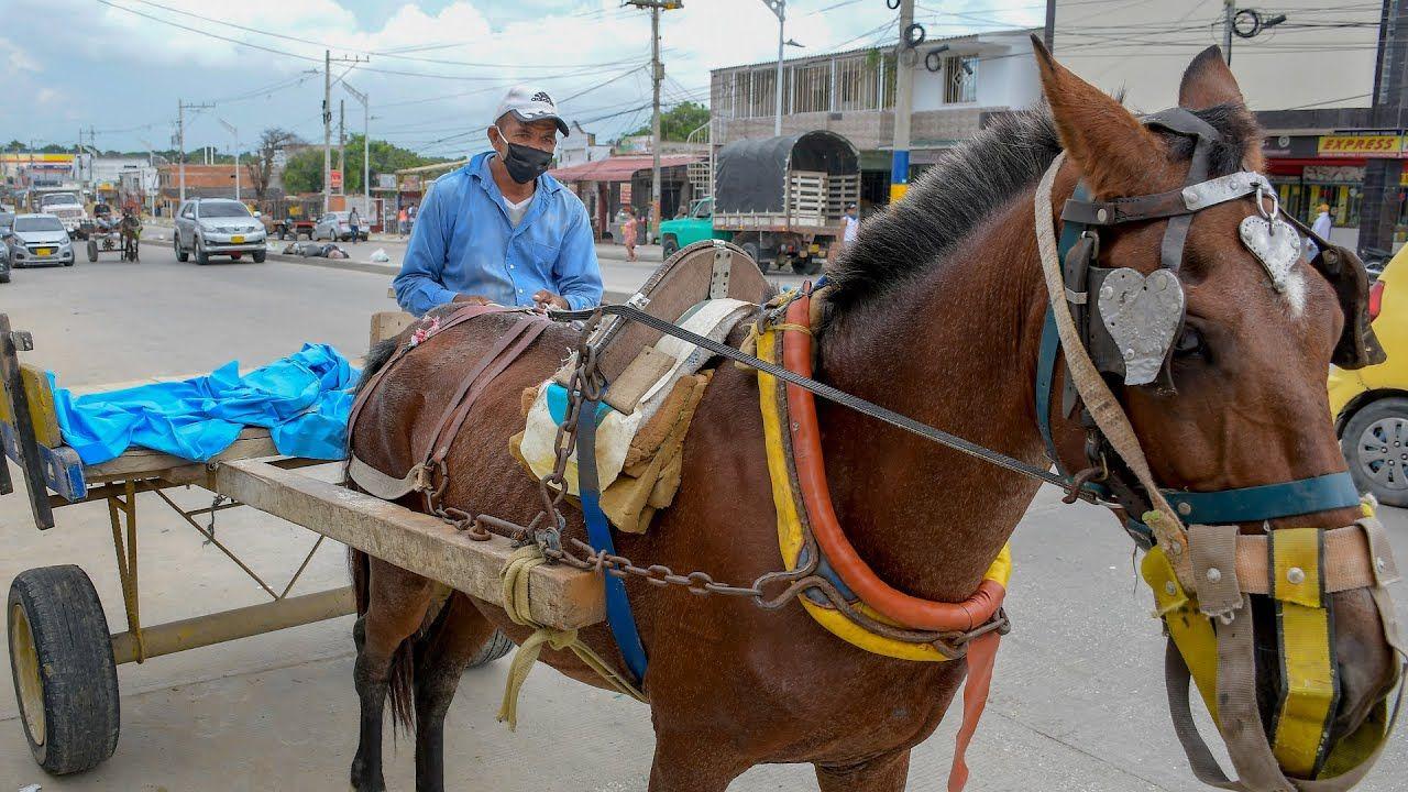 Vehículos de tracción animal, ya no podrán utilizarse en Colombia