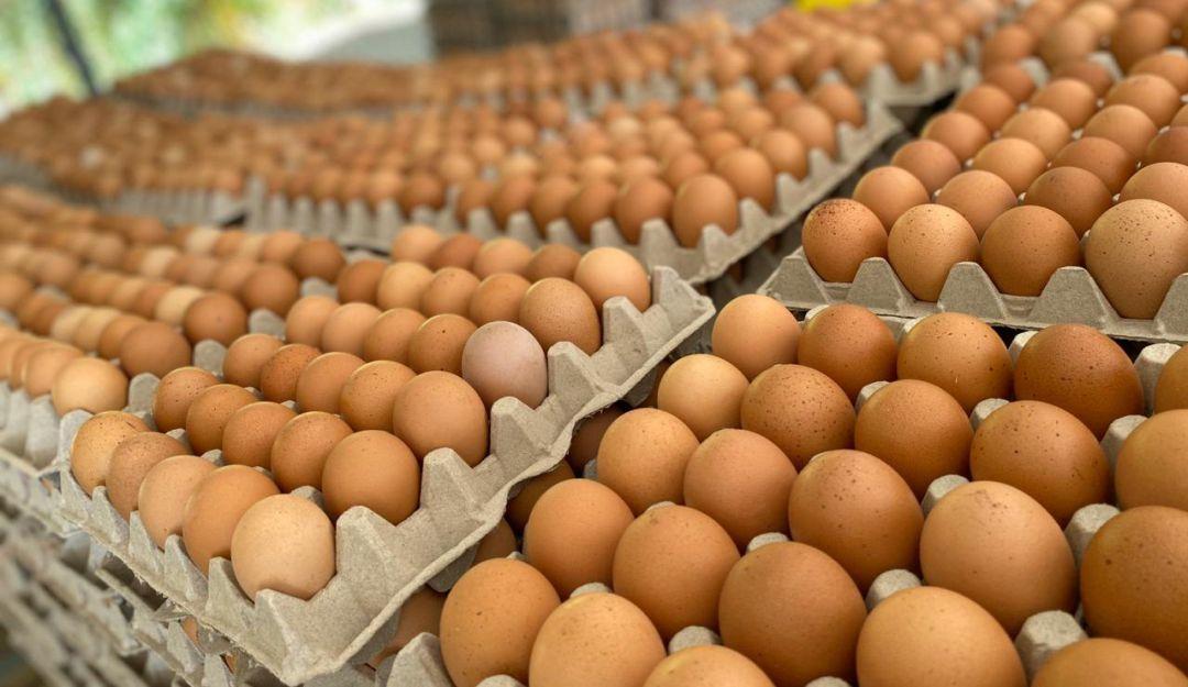 El precio del huevo podría llegar a los $1000