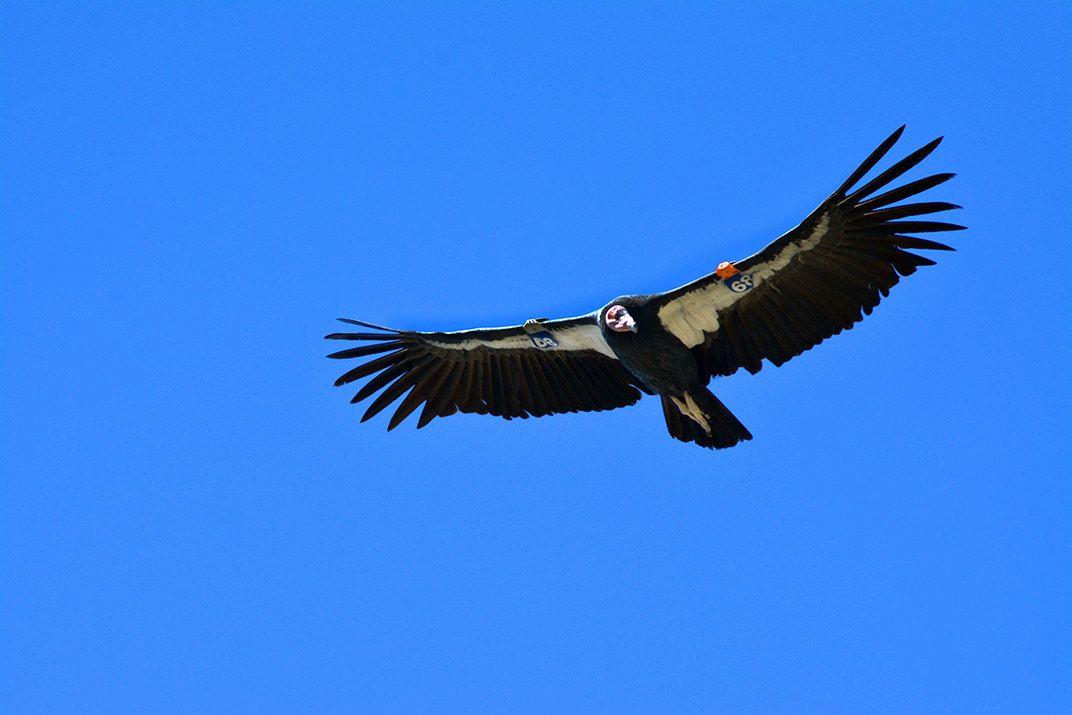 Ecuador crea el Parque Nacional Antisana, refugio del cóndor andino