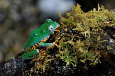 Descenso de anfibios y reptiles es por acción humana y no por cambio climático