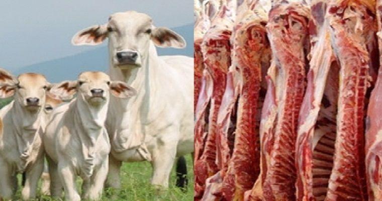 Histórico: exportaciones de carne bordearon los USD 100 millones en primer semestre de 2021