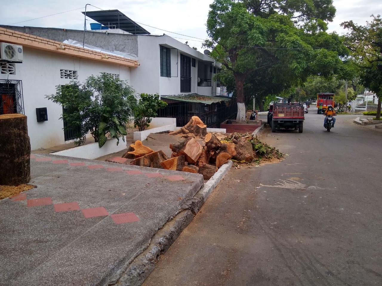 Por necesidad talaron árboles en el barrio Quirinal de Neiva