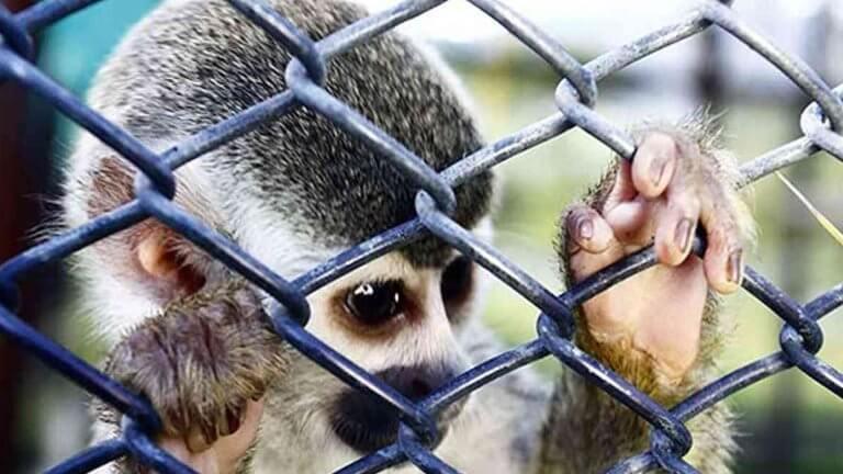 Judicialización de delitos contra animales anuncia la Fiscalía
