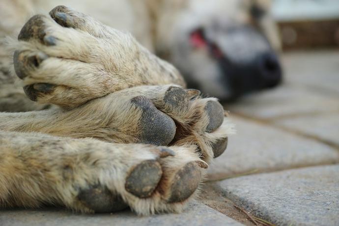 En Garzón perros y gatos están siendo envenenados