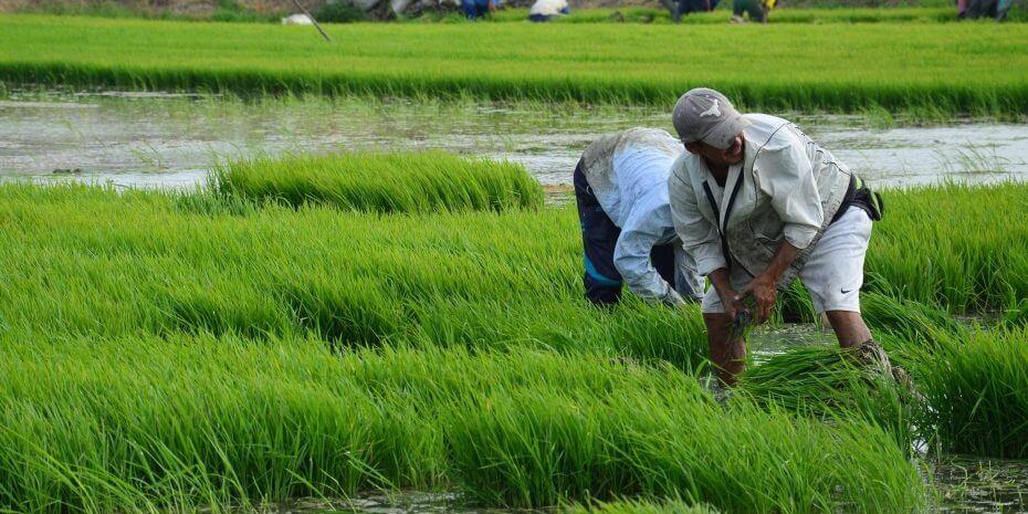"""""""Diversificar la agricultura del Huila, es favorable"""""""