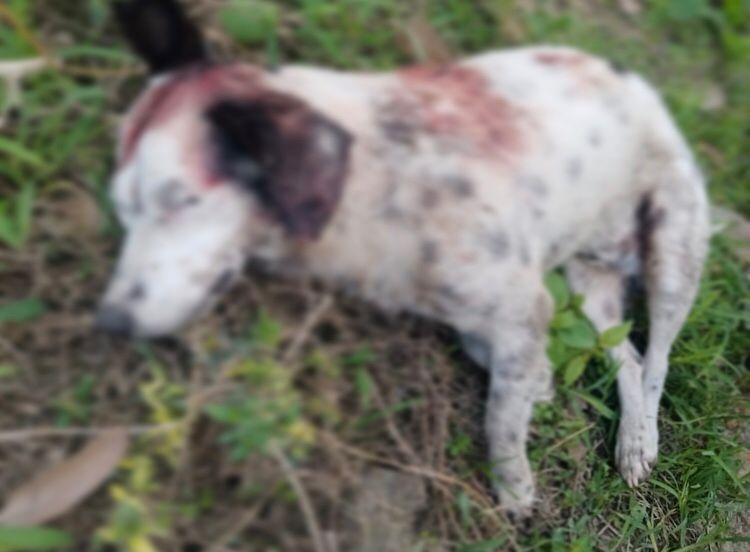 Autoridades se pronuncian frente a hecho de maltrato animal en La Plata